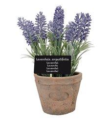 Lavender in AT pot L