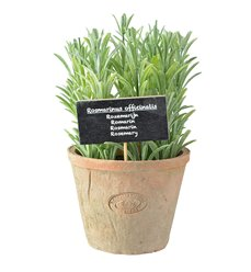 Rosemary in AT pot L